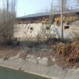Дикорастущие кустарники и деревья вдоль бетонной части канала